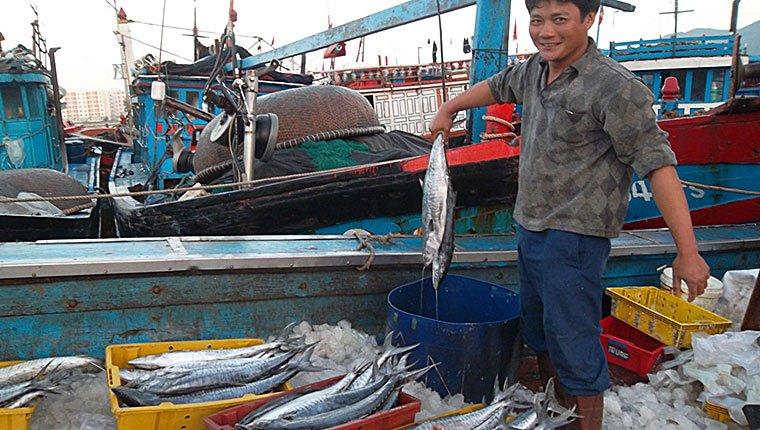 Bảo quản cá trên tàu